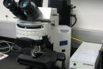 The Olympus BX41 Fluorescence Microscope
