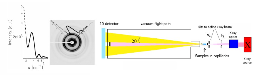 Safinya Group Research X Ray Scattering Diffraction